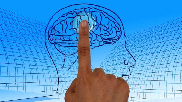Utilize os diferentes níveis do cérebro para uma comunicação mais eficaz