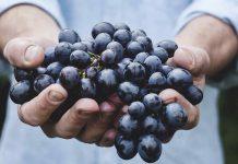 AgriEmpreende apoia novos projetos empreendedores