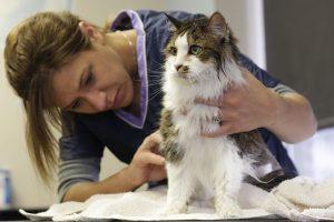 Cuidando de animais