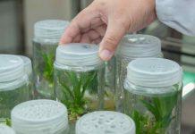 Projeto de biotecnologia vegetal vence concurso de inovação em Agrocluster