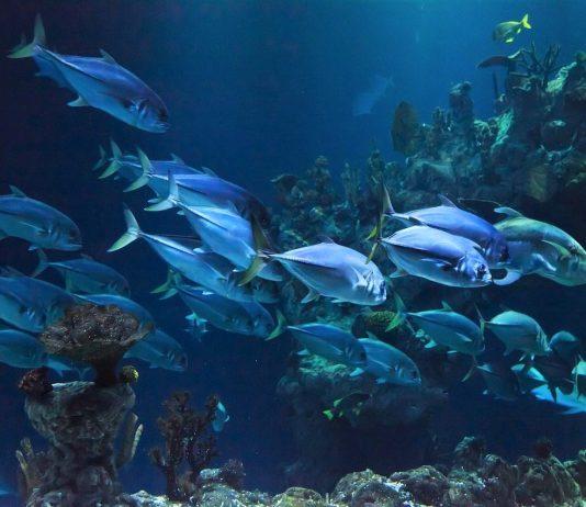Docapesca promove feira virtual de atividades do mar